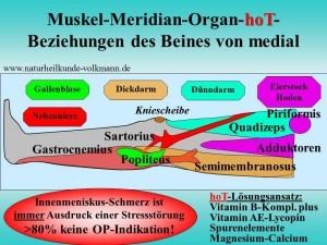 Muskel-Meridian-Vitaminversorgung